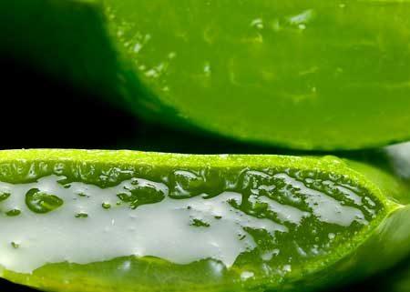 Aloe vera puro